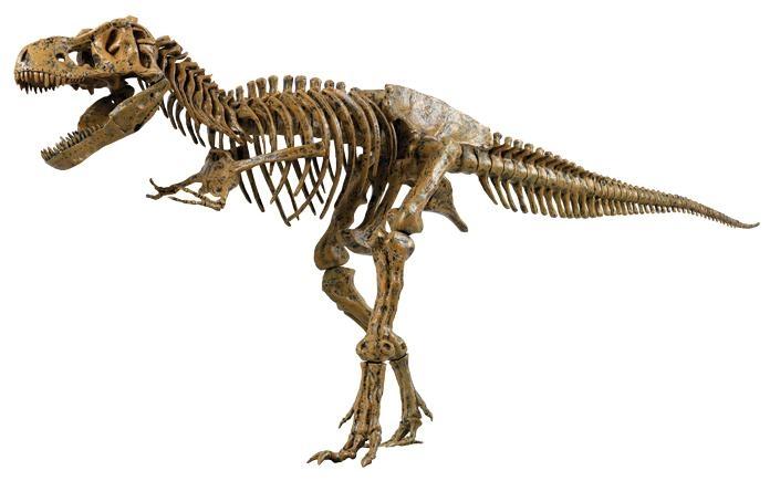 со строением скелета